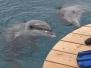 Eilat - Dolphin Reef